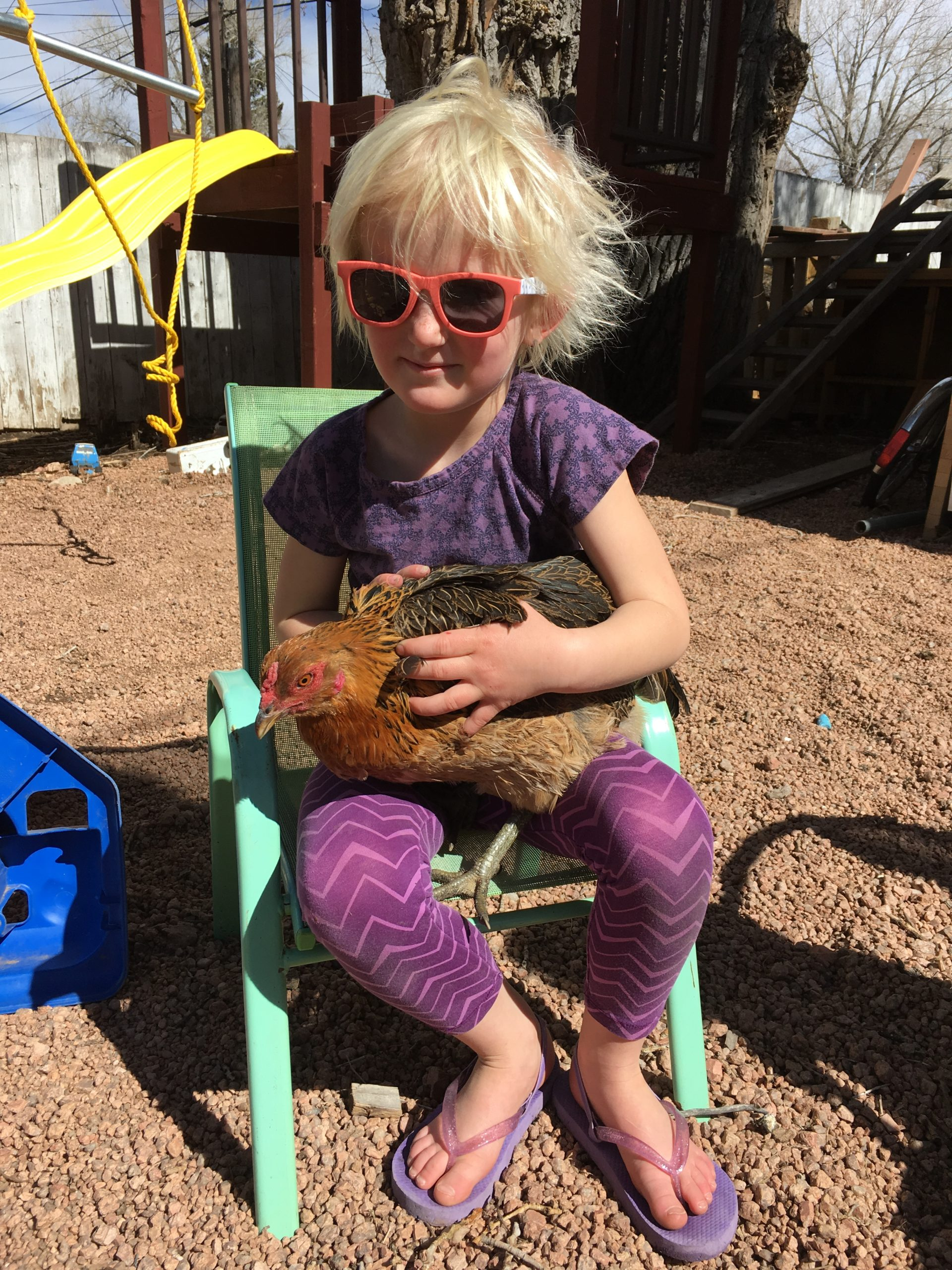 little girl with sunglasses holding a chicken